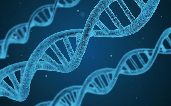 gesunder Stoffwechsel hat positive Auswirkungen auf die DNA